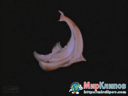 Дельфин - Дельфин