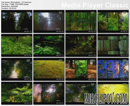 Minimalistix - A Forest