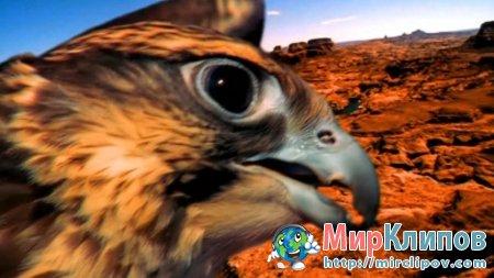 Rednex - The Spirit Of The Hawk